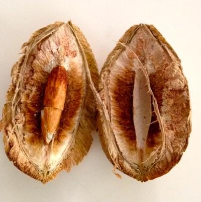 India-Almond4