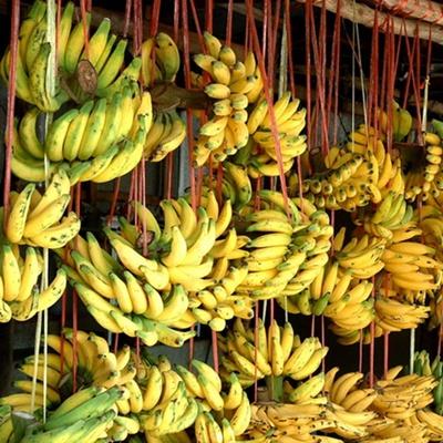 กล้วยเล็บมือนาง