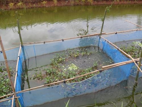 การเลี้ยงปลา1