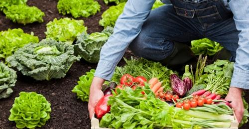 เกษตรอินทรีย์1