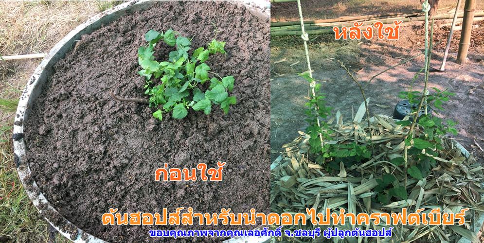 ผลการใช้น้ำหมักชีวภาพสูตรป้องกันแมลง-พืชเกษตร1